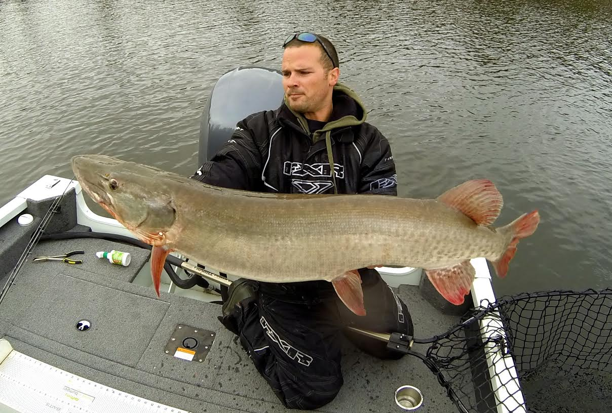 Giant Musky caught jigging on Lake of the Woods